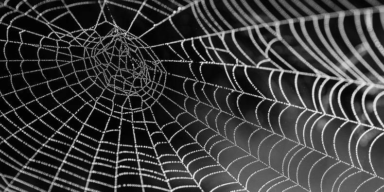 treatment overcome fear of spiders